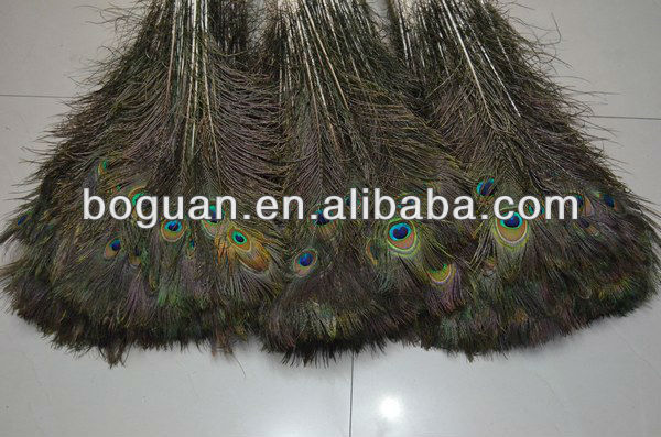 wholesale Peacock Feather