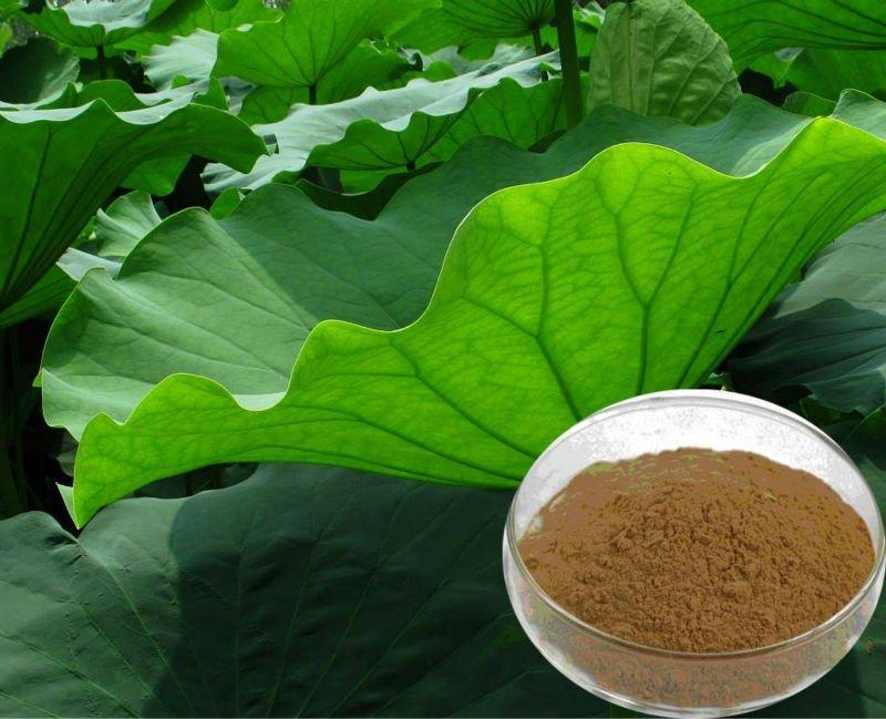 Pure Lotus Leaf Plant Extract/Nuciferine