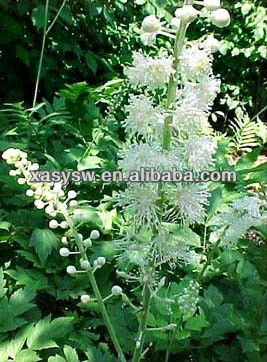 100% Natural Black Cohosh Extract 4:1 10:1