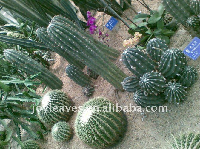artificial desert plants