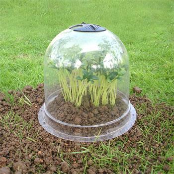 Plastic cover garden cloche cloche garden cloche backyard for Garden cloche designs