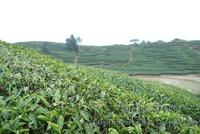Чай Пуэр Fu tea 100 ,