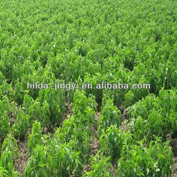 2015 High Quality Stevia RA 95-99%