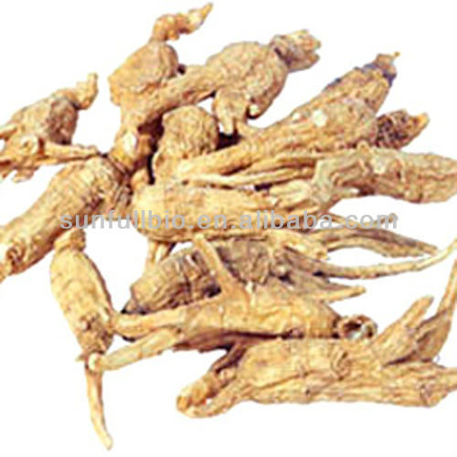 Angelica/dong quai Extract with Ligustide