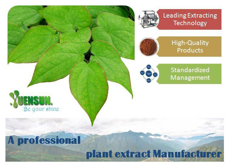 GMP factory kelp seaweed extract/fucoidan 85%