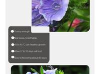 Карликовое дерево FLOWERSTORY 5 150 GaGarden Agineum A132