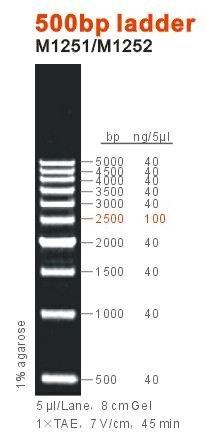 500bp ladder