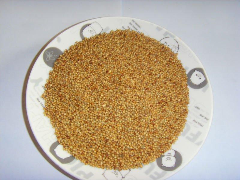 vivace hybride pennisetum gramin es fourrag res graines. Black Bedroom Furniture Sets. Home Design Ideas