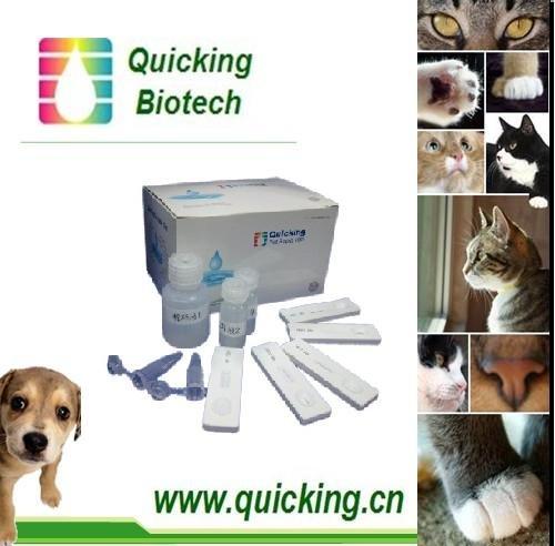 High Quality Canine Influenza Antigen test Cassette/ Canine Influenza Rapid Test Cassette/ Canine Influenza Test/Canine Influenz