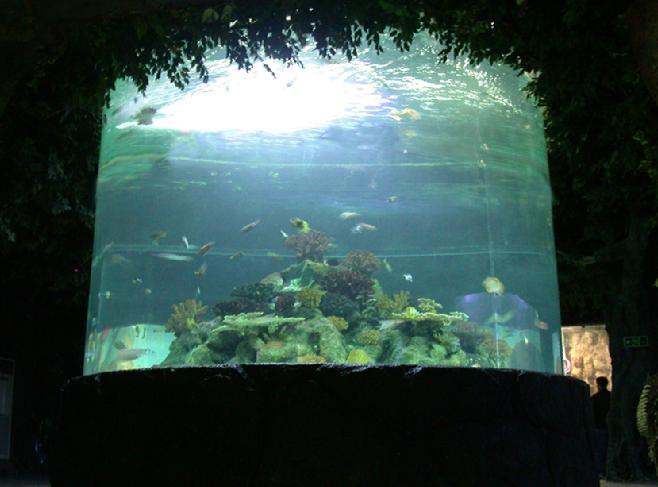 Custom Giant Acrylic Fish Tank for Sale