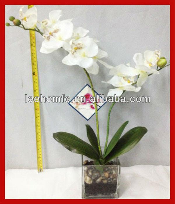 Orquídeas blancas flores en el vidrio jarrones para arreglos florales