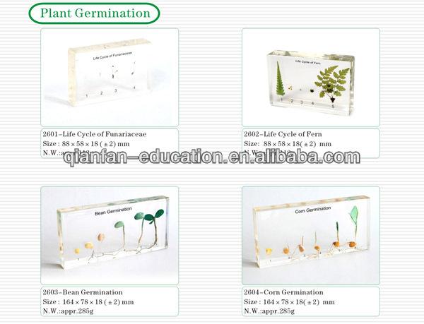 plant germination.jpg