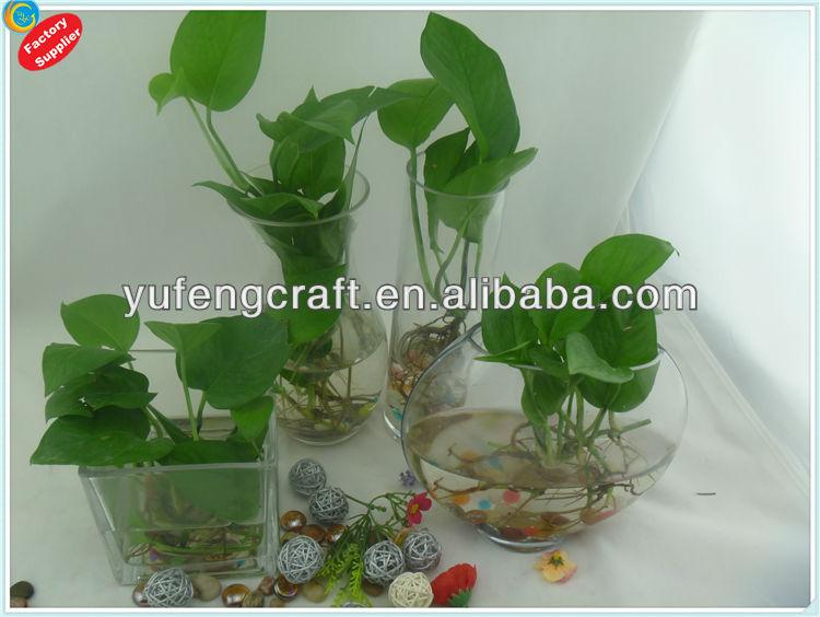trang alibaba cũng đang rao bán những cái lọ hay bình bằng kính với vô vàn những loại cây, hoa phong thủy