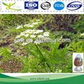 98% monnieri cnidium extrait osthole