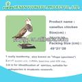 Duckspecimens/científica diversas aves especímenes. La escuela herramienta de enseñanza