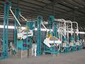 automático 500 kg / hora máquina molino de maíz