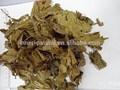 95% clorofilina, natural de sodio clorofilina megnesium