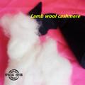 cachemire laine, cachemire moutons, fibre de laine naturelle,La laine de mouton