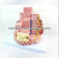 se33158 el músculo esquelético de fibra agrandar la microestructura médica modelo anatómico