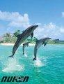 lindo animal del mar 3d animada carteles de los delfines