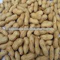 amendoim em casca top venda 2013 safra semente do amendoim