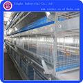 Multi- nivel de galvanizado en caliente de pollo de engorde coops