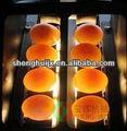Shenghui fj-2j fuente de luz fría egg-ray clasificador de inspección
