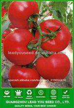 AT171 Huoshen semillas de tomate híbrido f1 semillas de hortalizas a granel