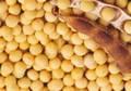 Producto herbario y Extracto de soja