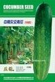 De semillas de hortalizas: zn mestizos chino semillas de pepino(129)