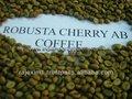 robusta granos de café verde precio