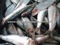 pescado sardina congelada
