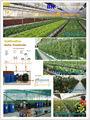Invernaderos Agricolas para la produccion de tomate y hortalizas