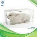 QF 3d la enseñanza de la ciencia de la muestra de conejo