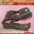 Replicas cientificas de el craneos del dinosaurio fósiles en resina y fibra de vidrio