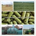pellet de alfalfa para los caballos