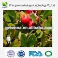 La hoja de níspero extracto de ácido ursólico/cas: 77-52-1