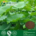 Pérdida de peso Ingrediente Lotus Leaf Extract 10:1,20:1