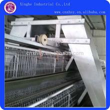 avicultura galinheiro equipamentos