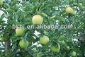 Manzana Vinagre tabletas efervescentes, refresco vinagre de manzana , productos de belleza , perder peso,productos para la const