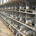 La jaula del conejo/de malla de alambre de la jaula para conejo