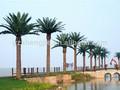 canary fecha palmeras utilizado al aire libre