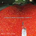 China Fabricante Polpa de tomate 36/38