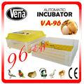 Profissional termostato eletrônico incubadora comercial para incubadora