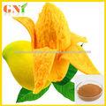 salvaje mango verde extracto de la semilla