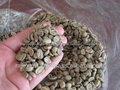 arábica coffee bean de exportadores