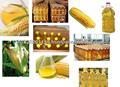 Aceite de maíz/maízamarillo aceite/indio maíz aceite/grado un aceite de maíz