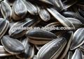 venda quente de origem chinesa sementes de girassol em grandes quantidades de óleo de sementes de classe aa 2014