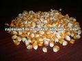 El mejor surtidor del maíz de la India