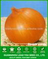 EN 01 Día de madurez temprana semillas de cebolla amarilla de semillas hortícolas híbridas para la venta